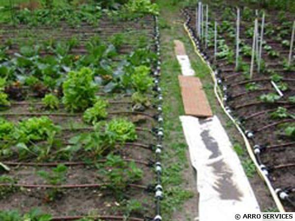 arrosage automatique d'un jardin potager