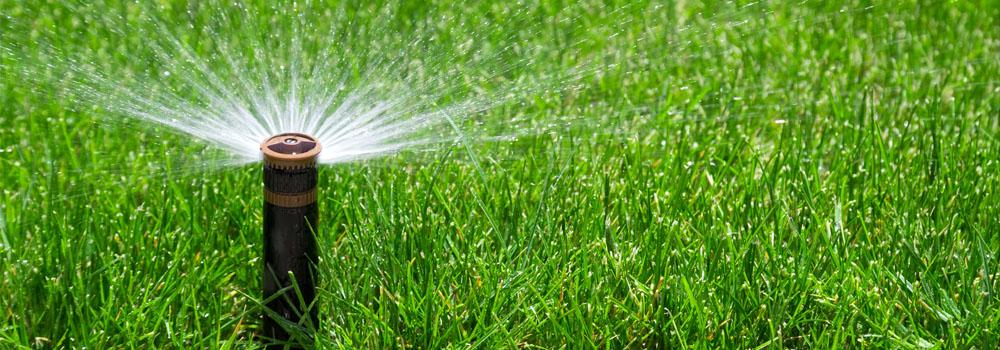 arrosage automatique de pelouse