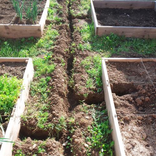 arrosage automatique jardin carre