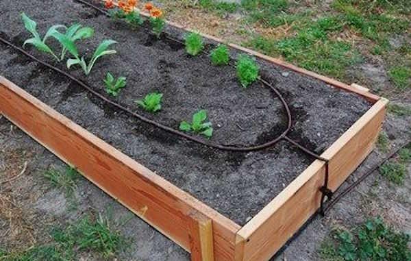 arrosage goutte a goutte jardin potager