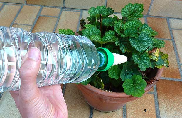 arrosage goutte a goutte plantes